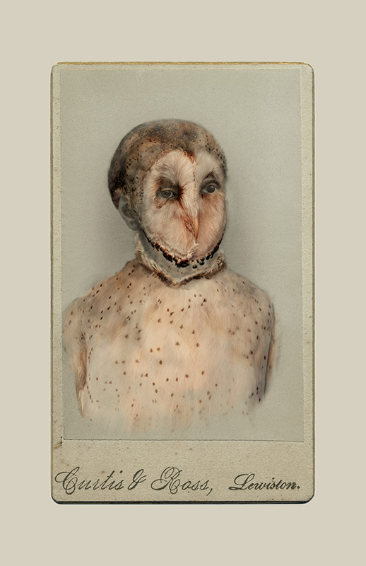 Aviary (Barn Owl/endangered), 2013