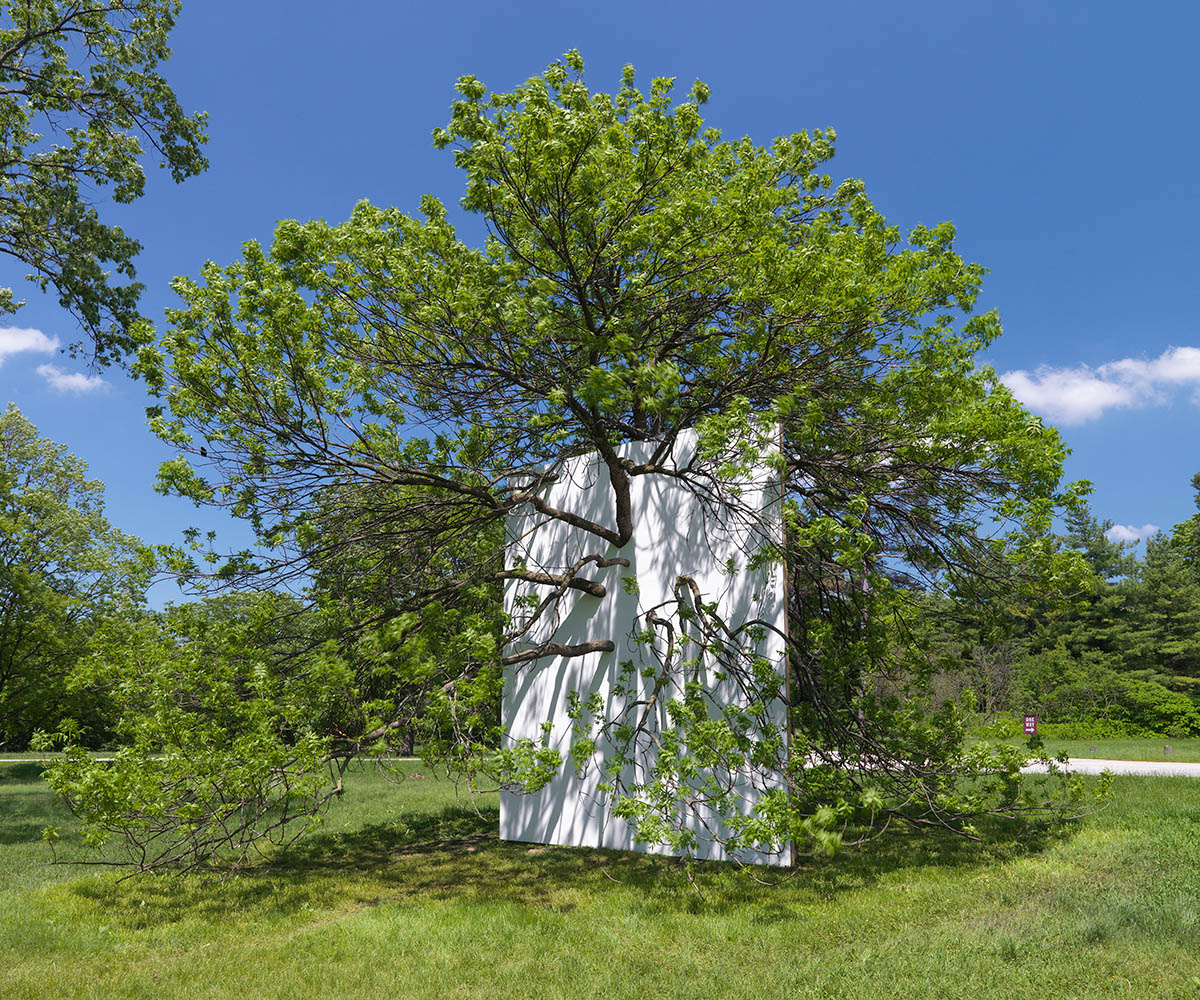 Letha Wilson: Wall in Blue Ash Tree (2011). Drywall, joint compound, paint, wood studs. 18′ h x 16′ w x 4″d. Installation at the Morton Arboretum, Lisle, Illinois.