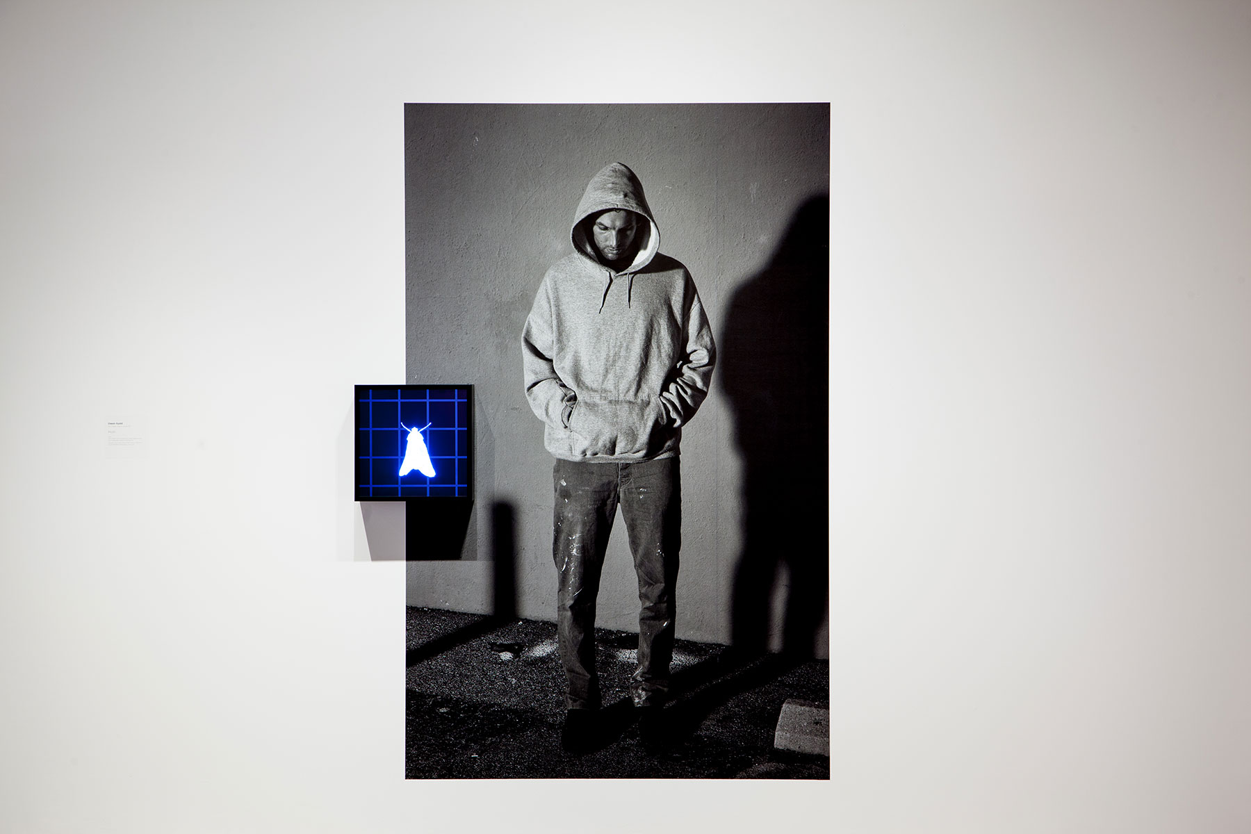 Owen Kydd: Moth (2015). Video (silent, colour, looped) on square digital monitor with media player, adhesive digital print. All images courtesy the artist, Monte Clark Gallery, Vancouver and Nicelle Beauchene Gallery, New York.