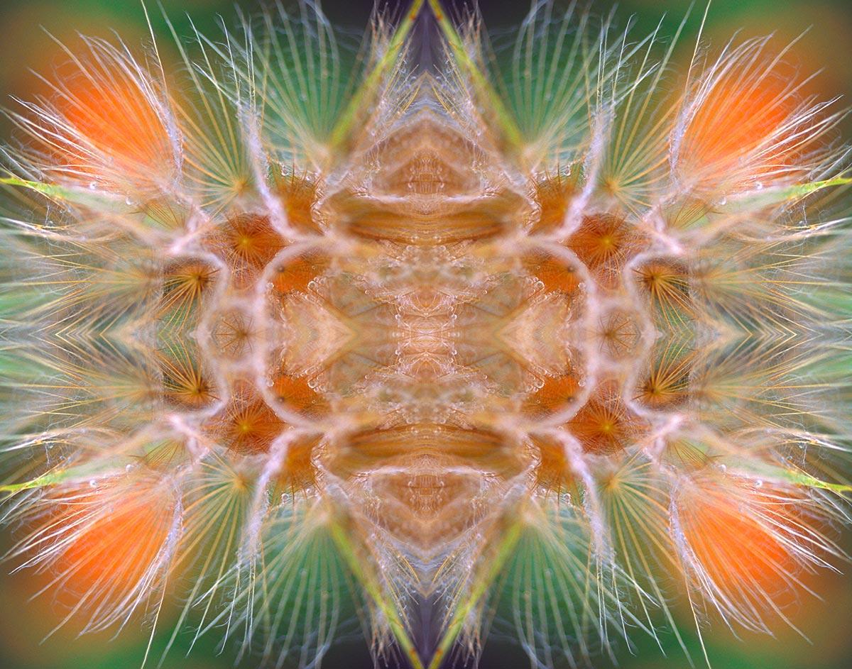 Cosmic Dawn by Philomena O'Dea